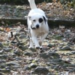 Familienhund, Begleithund, Familienbegleithund