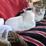 Katzen, Tierschutz, Betreuung,