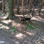 Marburg. Wald, Bracken, Mischling, Hunde, Schule, Ebsdorfergrund,Marburg, Lahnberge